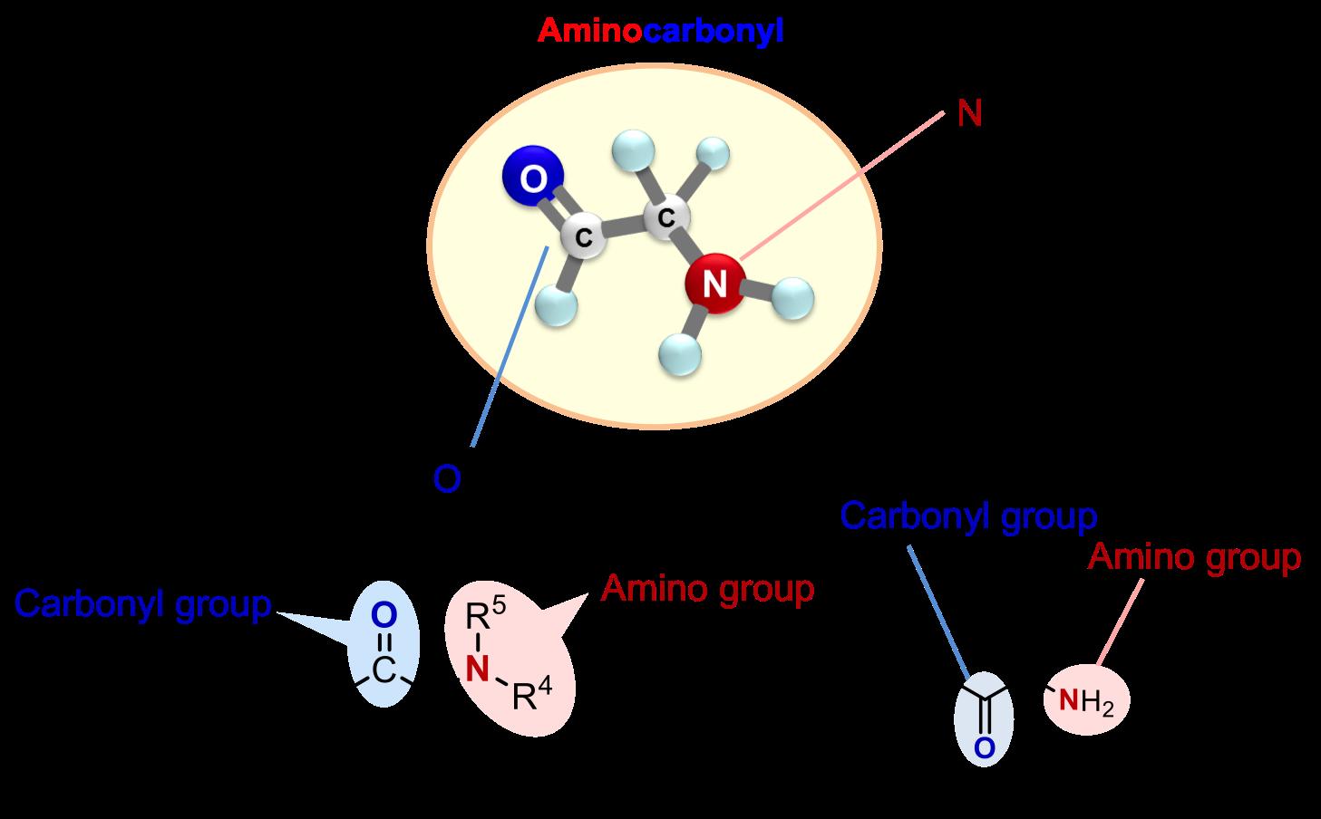 Aminocarbonyl_Figure2.png