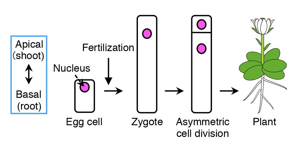 AsymmCD_Figure1.jpg
