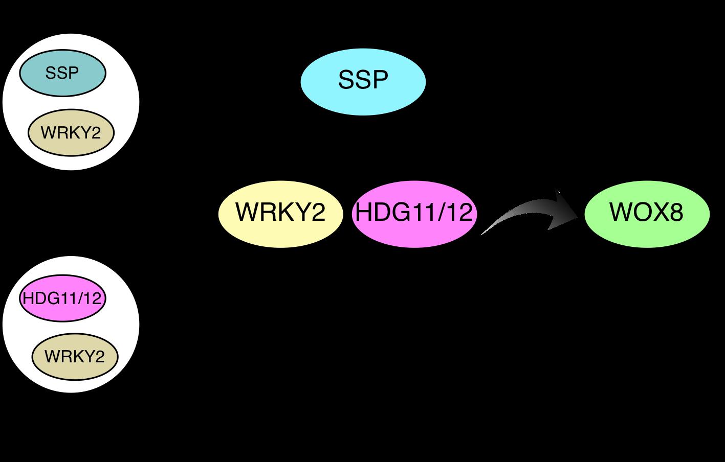 Fig4_GandD_EN.png