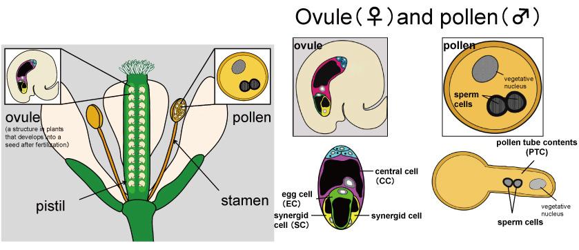 Figure1-1_POEM_EN.jpg
