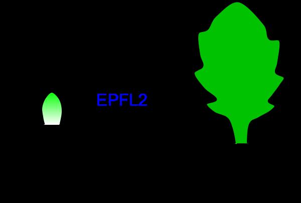 Figure1_Leaf_EN.png