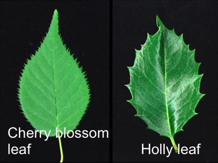 Figure2_Leaf_EN.png