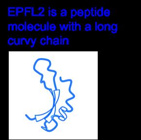 Figure3_Leaf_EN.png