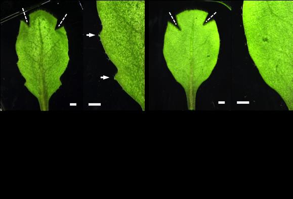 Figure4_Leaf_EN.png