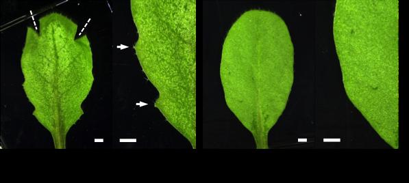 Figure6_Leaf_EN.png
