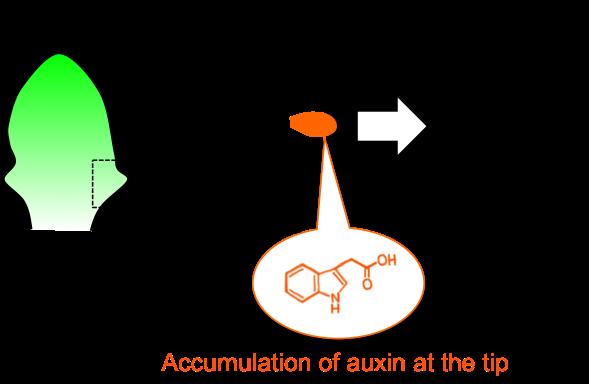 Figure7_Leaf_EN.png
