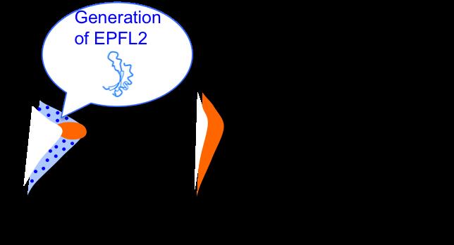 Figure8_Leaf_EN.png