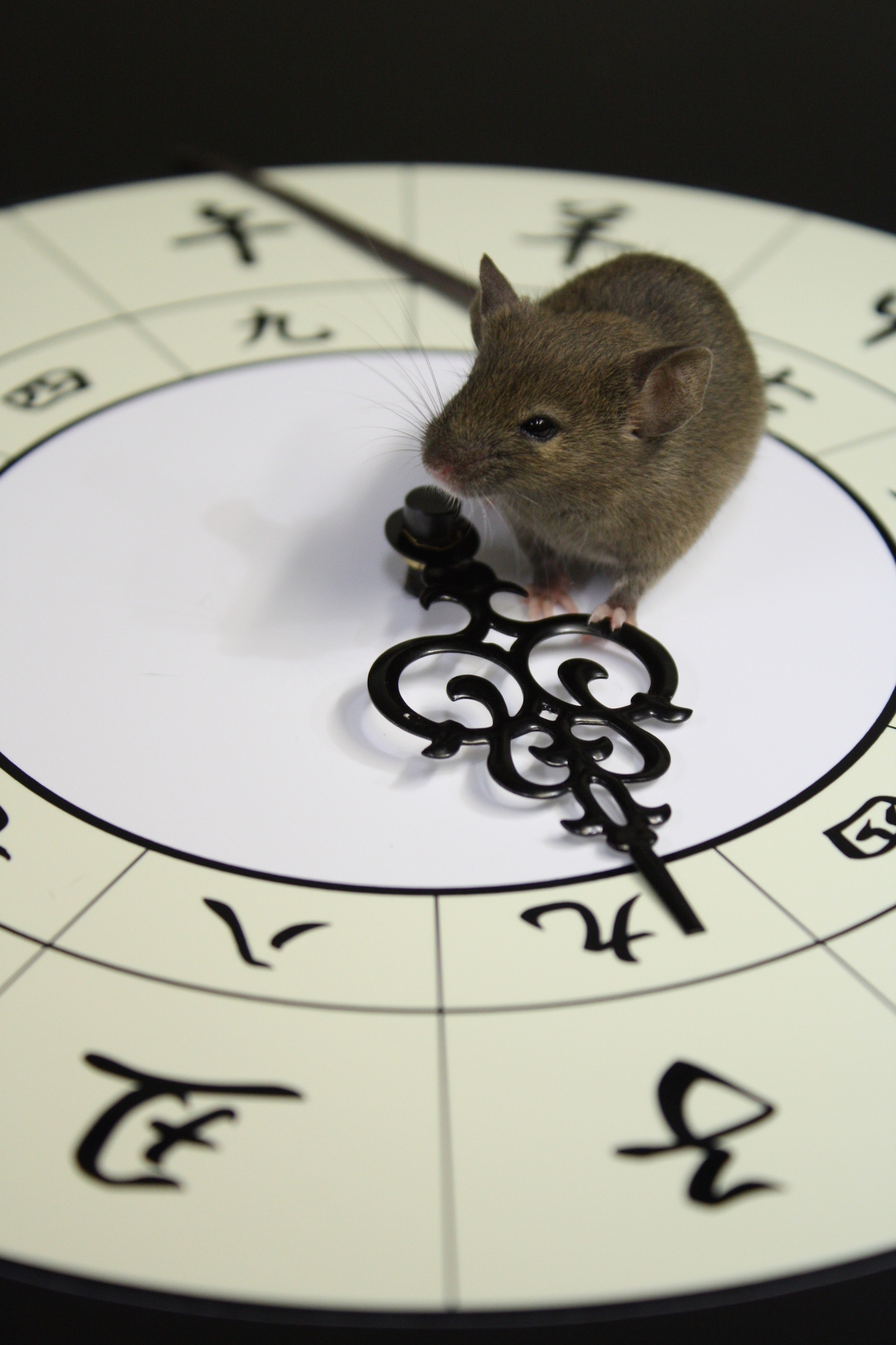 Mouse_Clock.jpeg