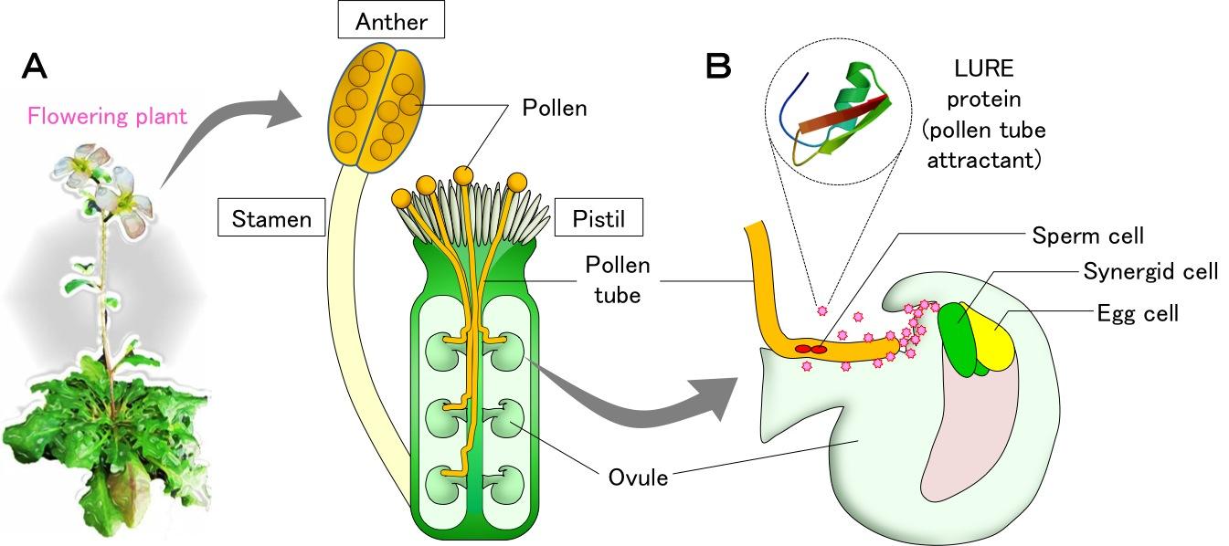 Nature_Figure1.jpg
