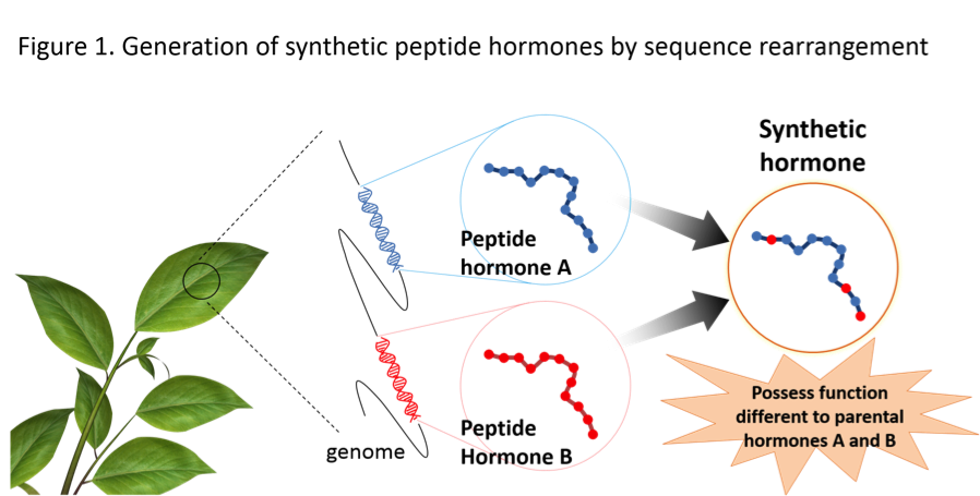 PlantPeptide_Fig1_EN.png