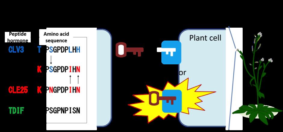 PlantPeptide_Fig2_EN.png
