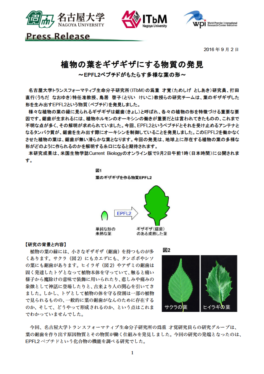 http://www.itbm.nagoya-u.ac.jp/ja/research/20160902_Saw_Leaf_JP_PressRelease_ITbM.png