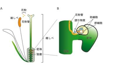AMOR_JP_Figure1.jpg