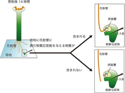 AMOR_JP_Figure2-A.jpg
