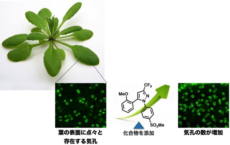 CC_Plants_Fig1.png