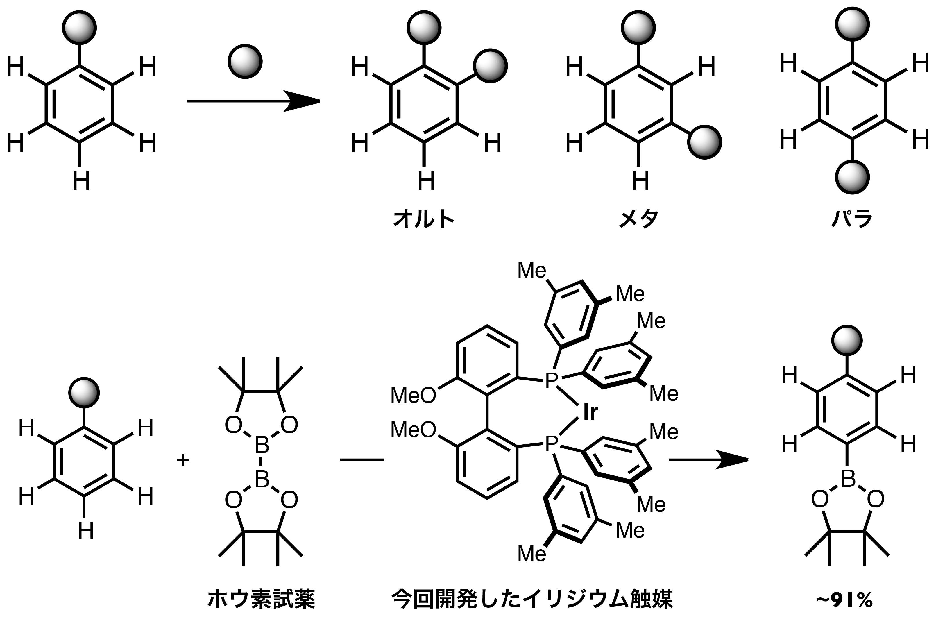 Fig2_ParaBoryl.jpg