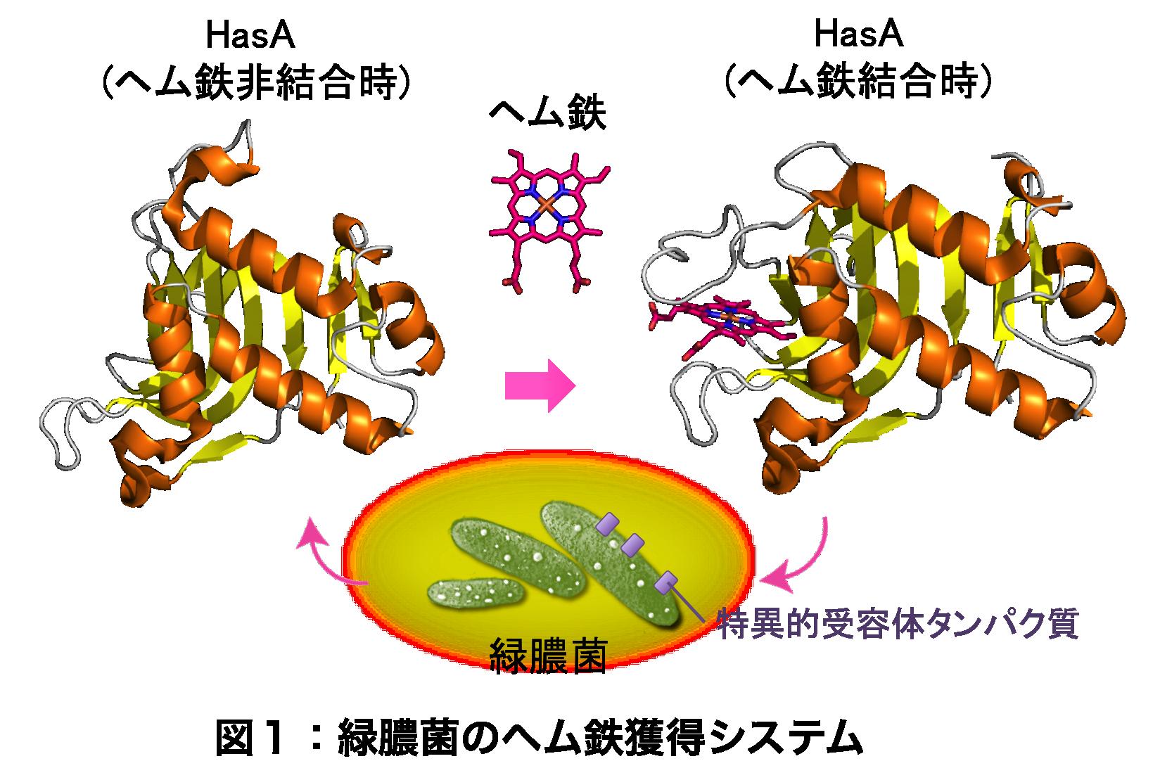 Figure1_JP.png