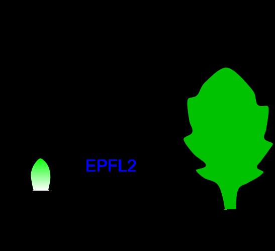 Figure1_Leaf_JP.png