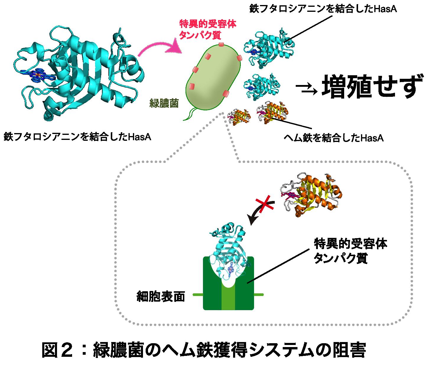 Figure2_JP.png