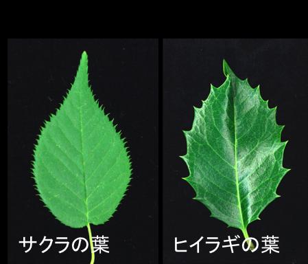 Figure2_Leaf_JP.png