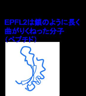 Figure3_Leaf_JP.png