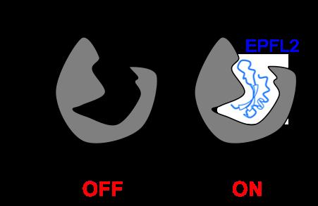 Figure5_Leaf_JP.png
