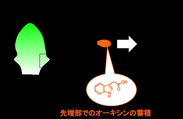 Figure7_Leaf_JP.png
