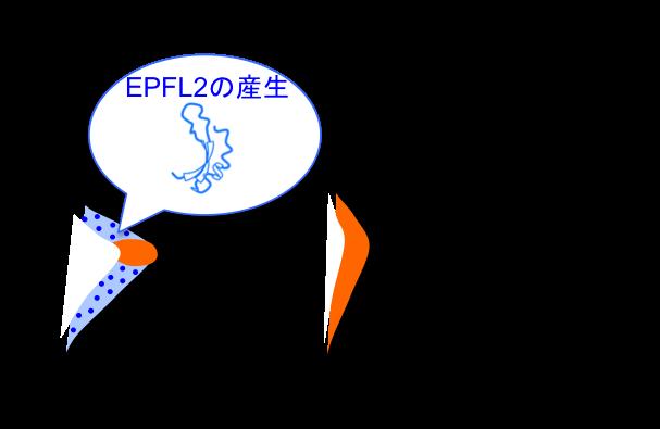 Figure8_Leaf_JP.png