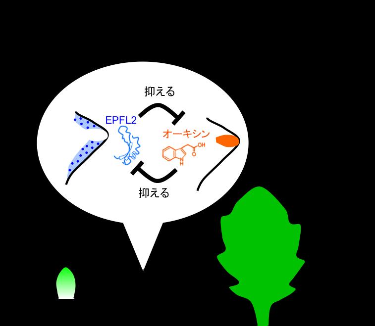 Figure9_Leaf_JP.png