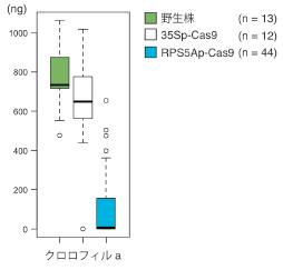 Kamaitachi_Fig2_JP.jpg