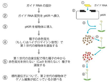Kamaitachi_Fig5_JP.jpg