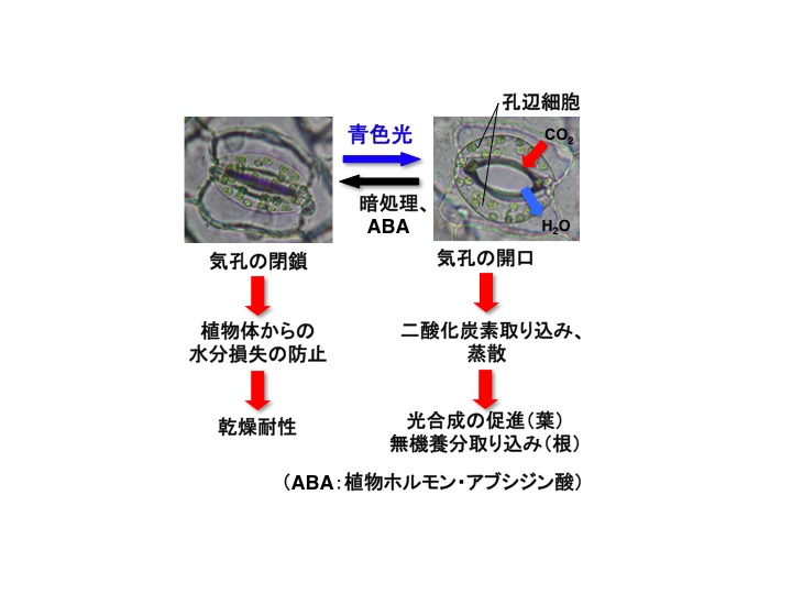 Kinoshita_PCP_Fig1_JP.jpg