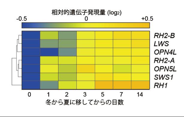 Medaka_Fig5.png