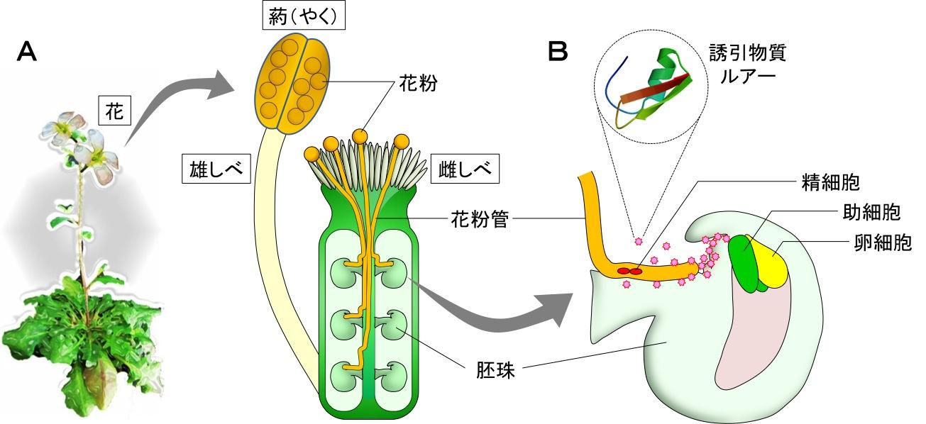 Nature_JP_Figure1.jpg