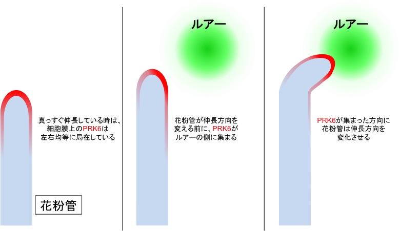 Nature_JP_Figure3.jpg
