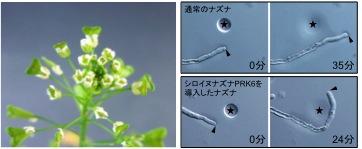 Nature_JP_Figure4.jpg