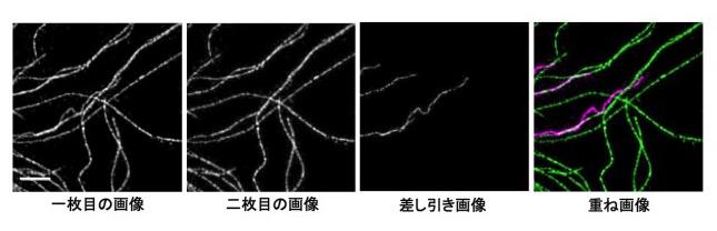 PB430_Fig2_JP.jpg