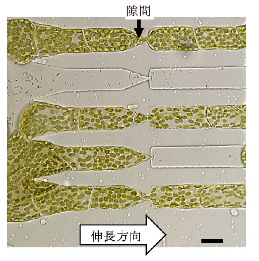 PlantCell_Fig3.png