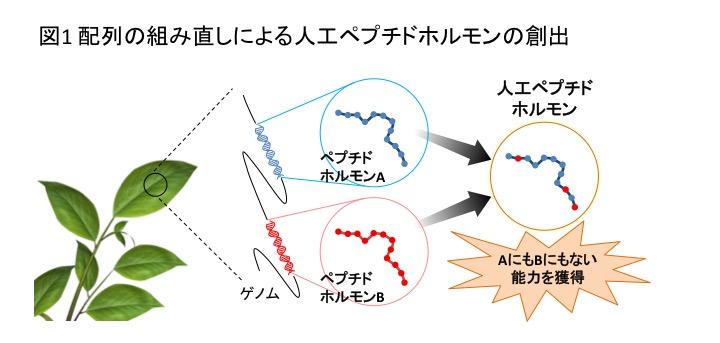 PlantPeptide_Fig1_JP.jpg