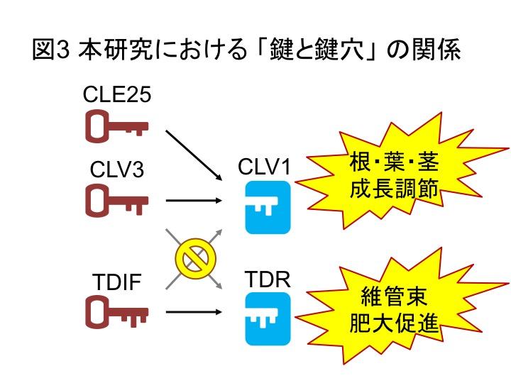 PlantPeptide_Fig3_JP.jpg