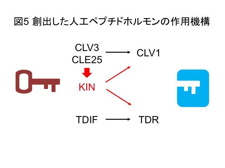 PlantPeptide_Fig5_JP.jpg