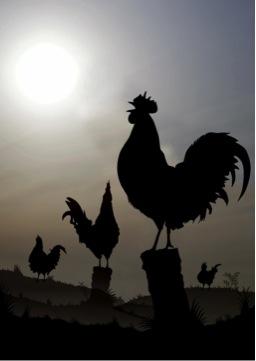 Rooster_Crow.jpg