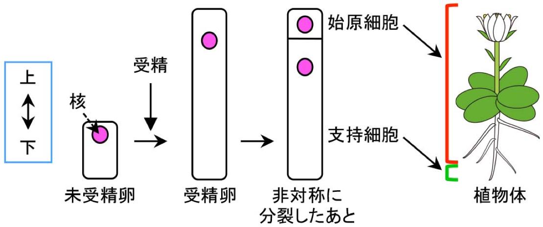 ueda_fig1_ja.png